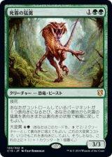 死霧の猛禽/Deathmist Raptor 【日本語版】 [C19-緑MR]《状態:NM》