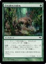 吠え群れの飢え/Hunger of the Howlpack 【日本語版】 [DKA-緑C]
