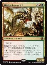 野蛮生まれのハイドラ/Savageborn Hydra 【日本語版】 [IMA-金R]