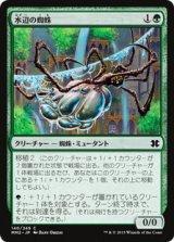 水辺の蜘蛛/Aquastrand Spider 【日本語版】 [MM2-緑C]