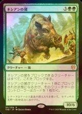 [FOIL] ネシアンの猪/Nessian Boar 【日本語版】 [THB-緑R]《状態:NM》