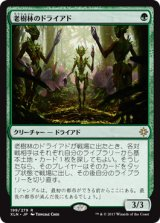 老樹林のドライアド/Old-Growth Dryads 【日本語版】 [XLN-緑R]